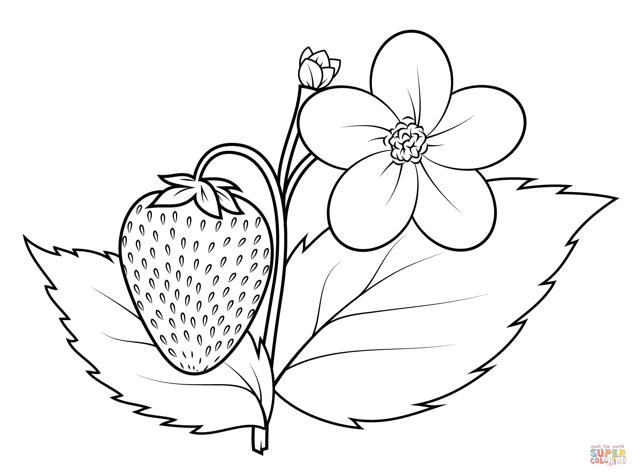 2046x1526 Strawberry Plant Coloring Page Free Printable Coloring Pages