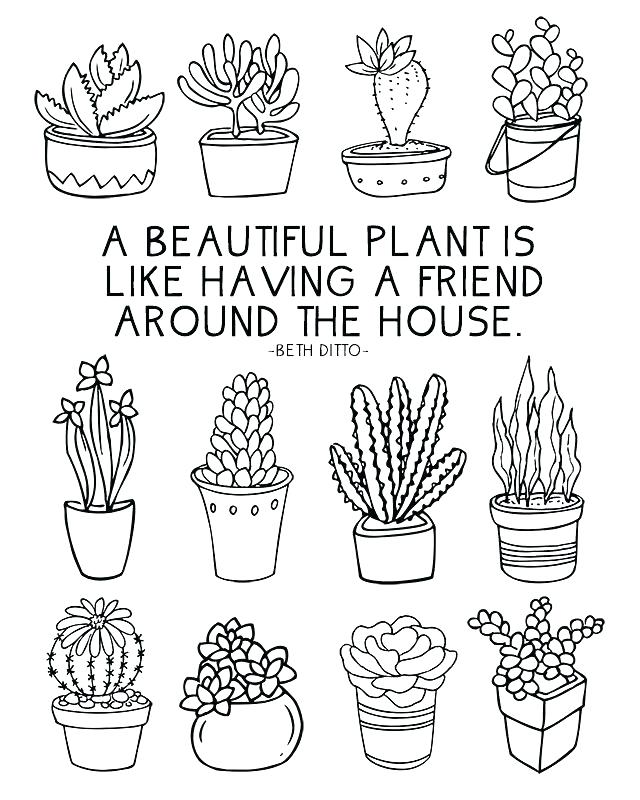 640x800 Parts Of A Plant Coloring Page