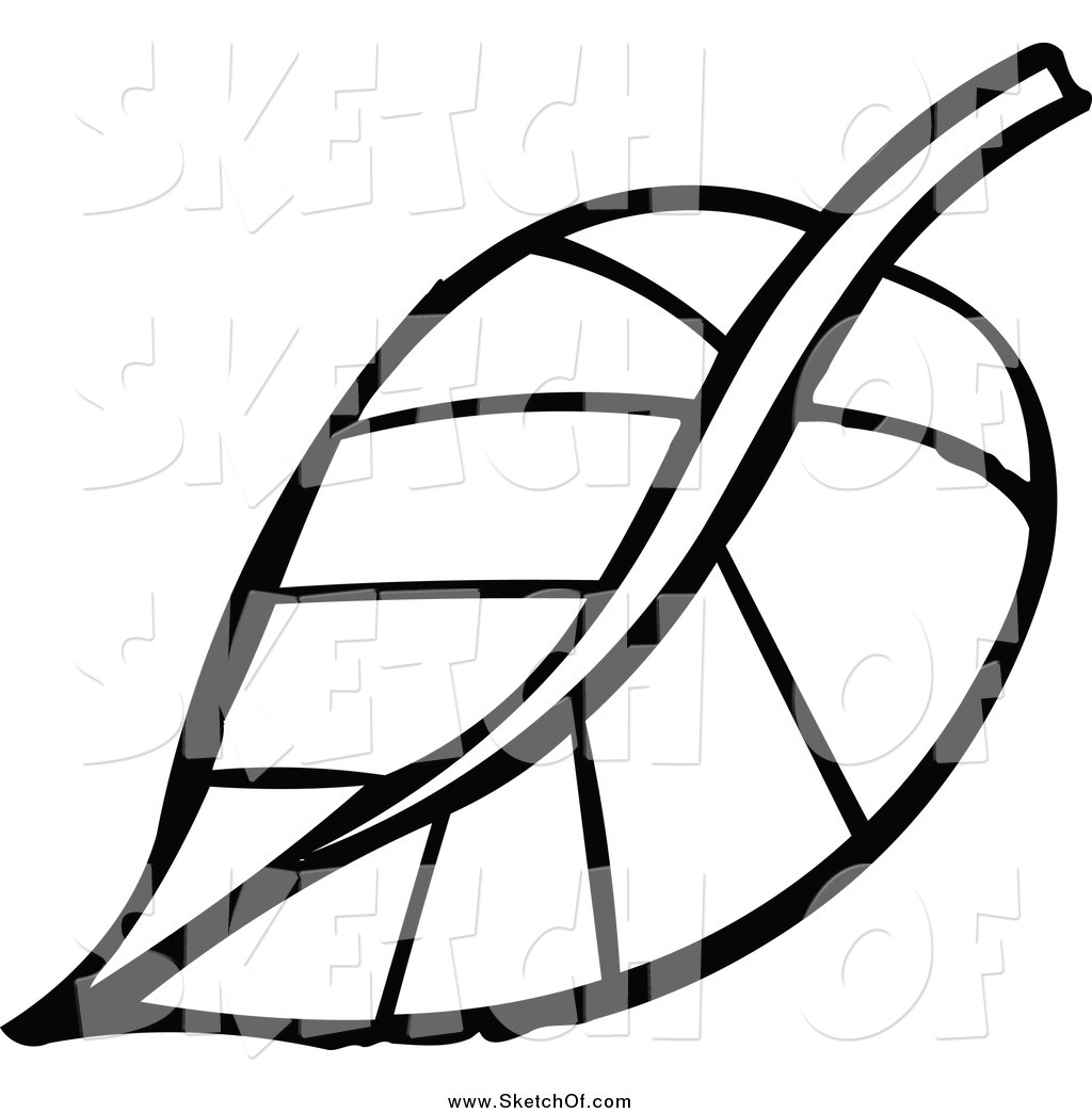plant drawing black and white at getdrawings com free for personal rh getdrawings com leaf clip art black and white free leaf clip art black and white free