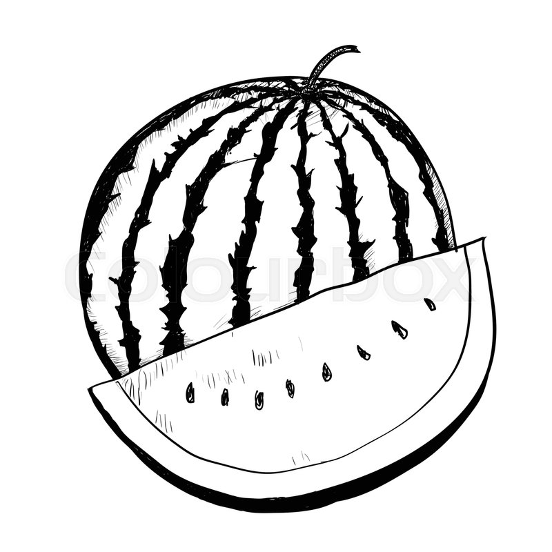 800x800 Hand Drawing Of Watermelon On White Background. Black And White