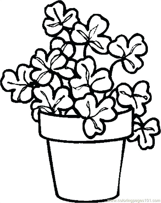 Plant Drawing For Kids