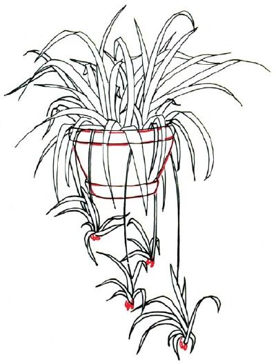 Plant Pot Drawing