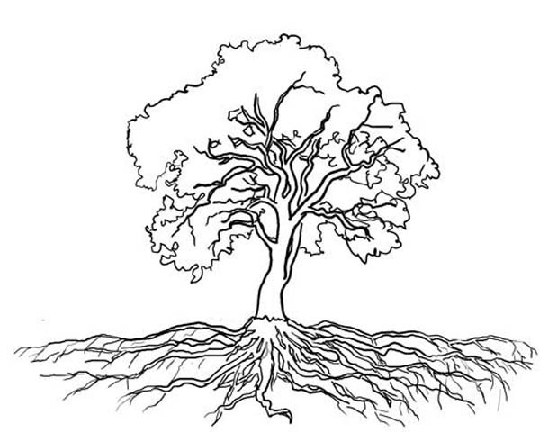 600x480 Tree With Roots Coloring Page Roots
