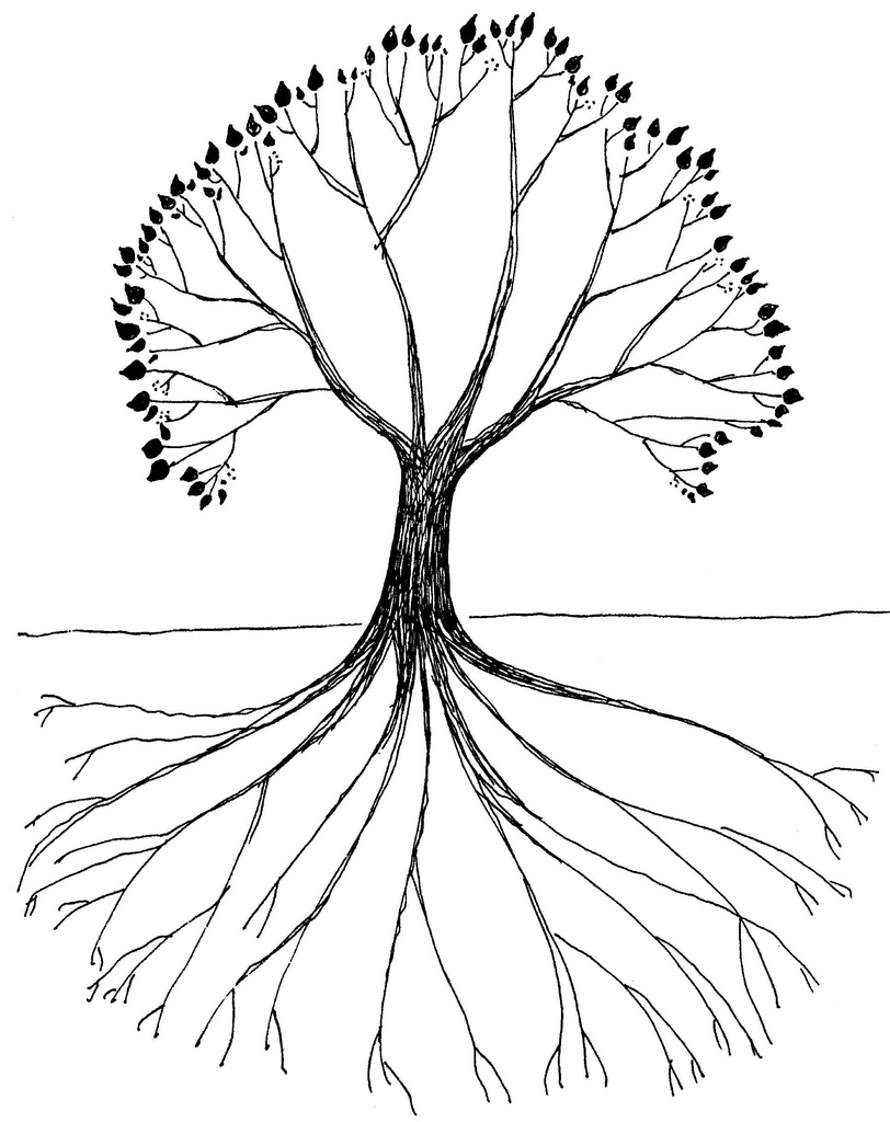 812x1024 Tree With Roots Drawing By Jim Forest Jim Forest