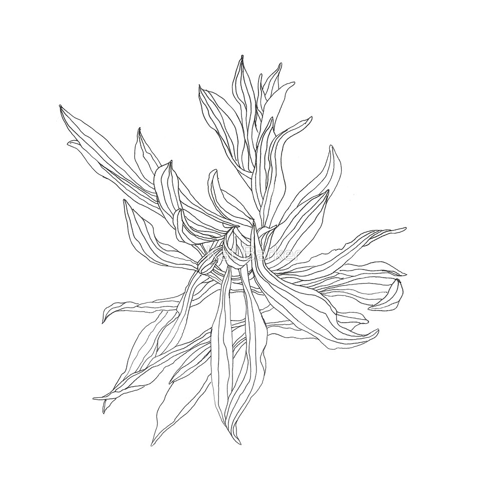 1000x1000 Plantain Line Drawing By Kat Barker Redbubble
