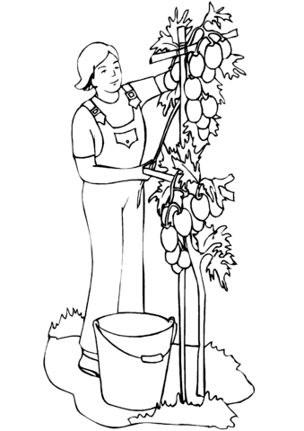 339x480 Man Planting Tomatoes Coloring Page Free Printable Coloring Pages