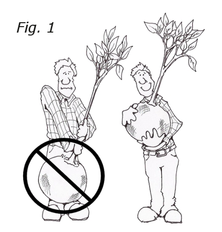 450x470 Tree Planting Instructions