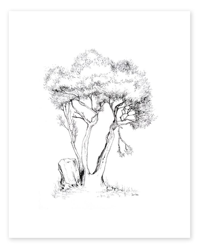 700x875 Plant Trees By Donating Trees Or Buying A Tree Print
