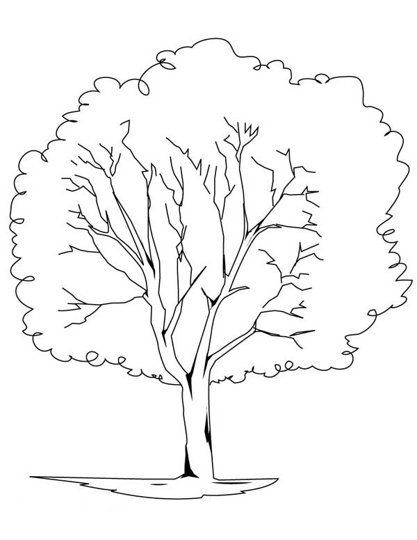 600x776 Planting Oak Tree Coloring Page Color Luna