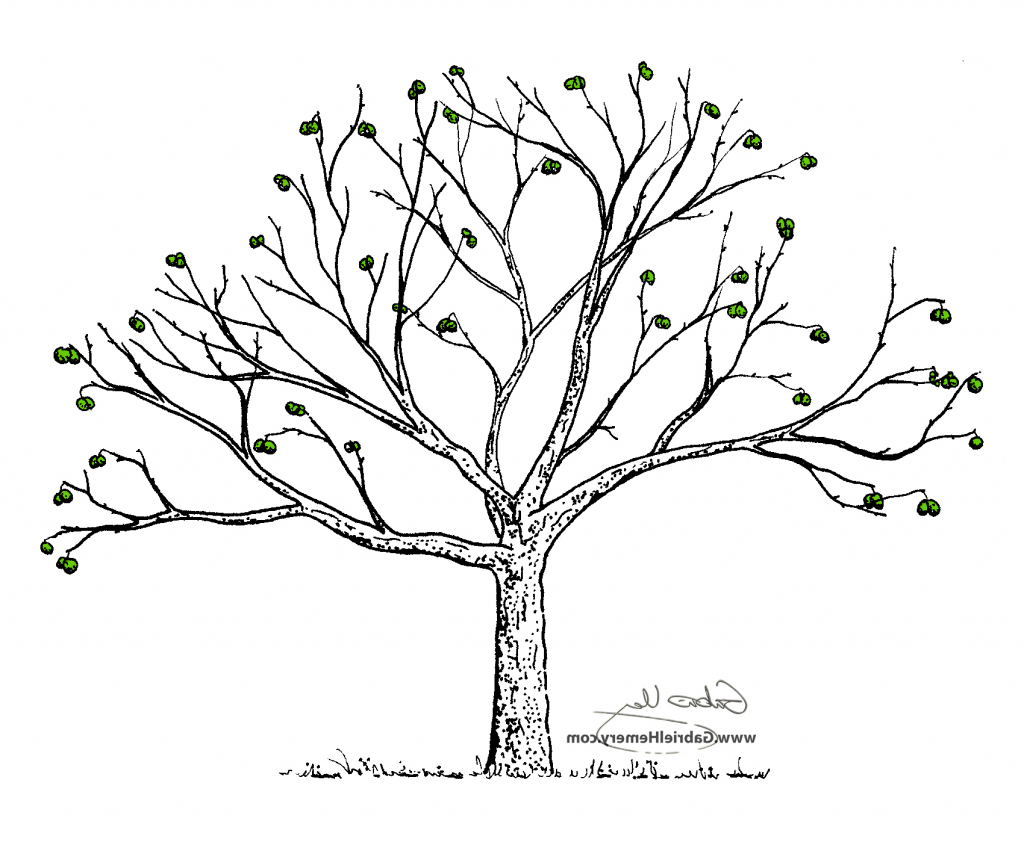 1024x842 Small Fruit On The Tree Drawing Small Tree Drawing Small Leafless