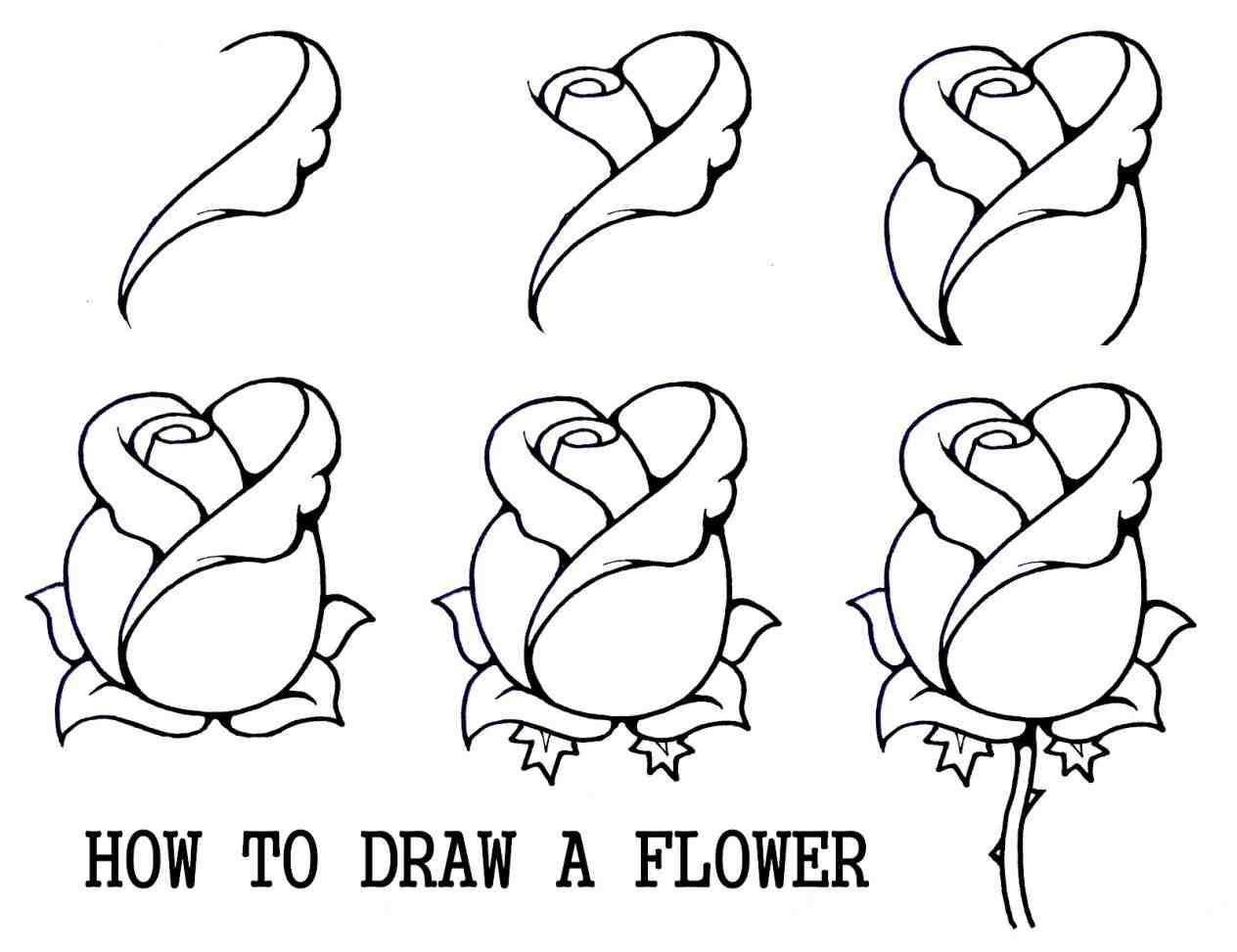 1264x973 Flower Drawings Tumblr Step By Step