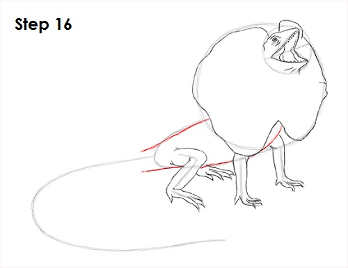500x386 How To Draw A Frilled Neck Lizard