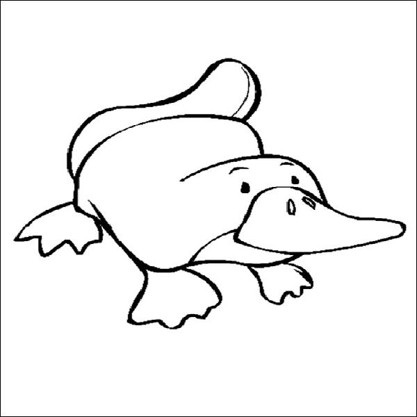 600x600 Platypus Coloring Pages