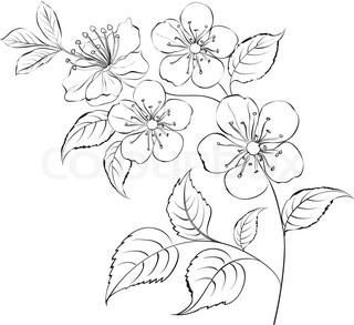 320x293 Drawn Ume Blossom Black And White