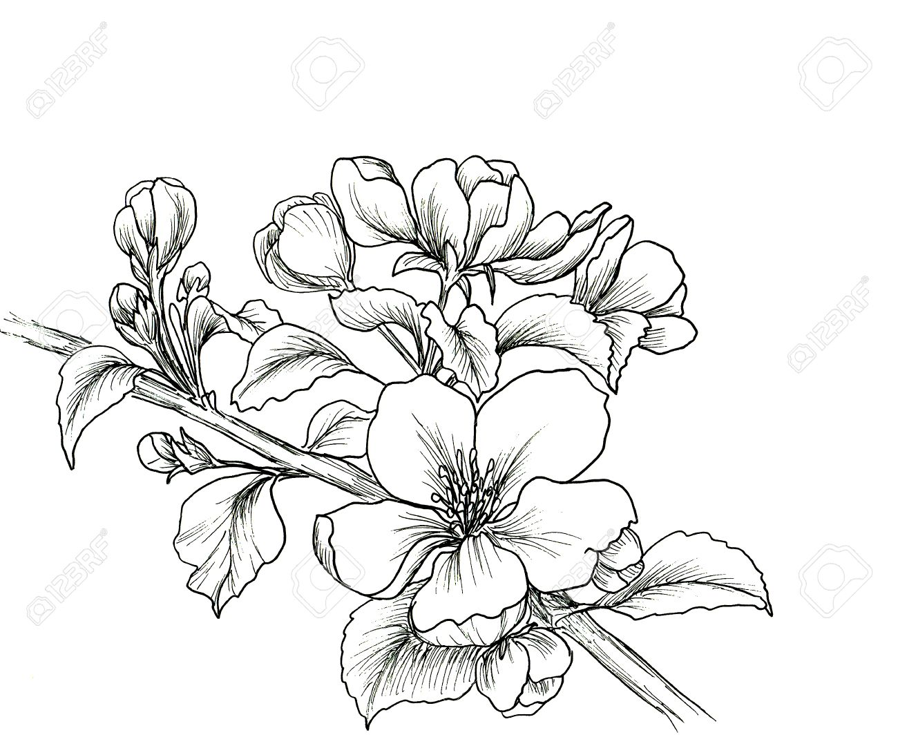1300x1067 4,940 Plum Blossom Stock Illustrations, Cliparts And Royalty Free
