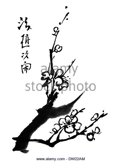 404x540 Plum Blossom Japan Stock Photos Amp Plum Blossom Japan Stock Images