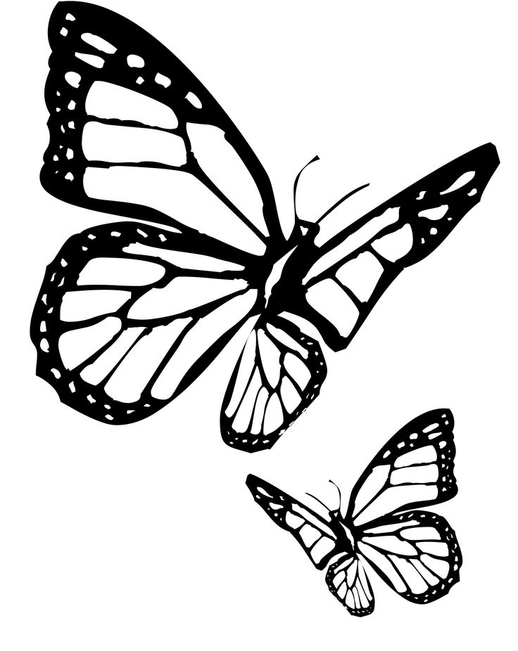 736x926 55 Best Butterflies Amp Plum Blossoms Images On Blossoms