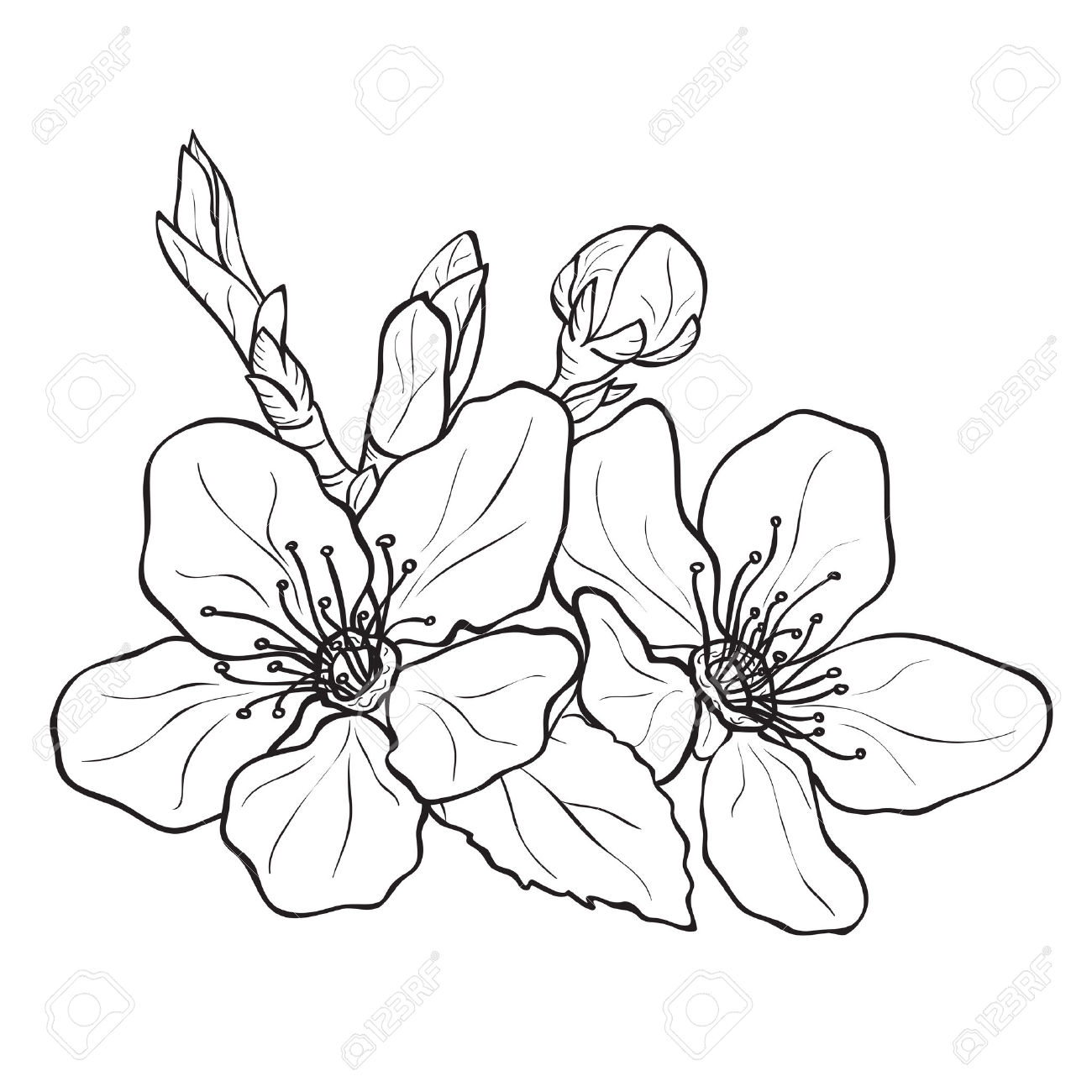 The Best Free Flor Drawing Images Download From 33 Free Drawings Of