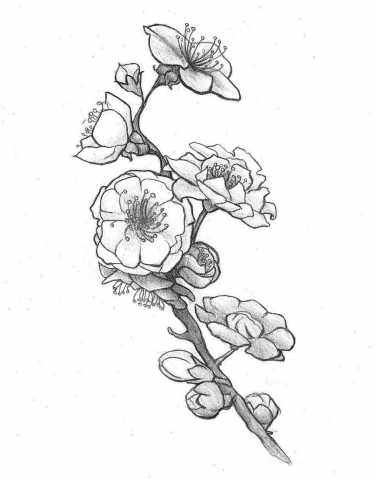 376x480 Thigh Plum Blossomsellka On Ideas Galleries