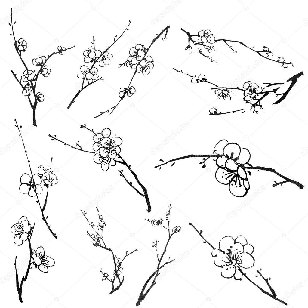 1024x1024 Plum Blossom Branches Stock Photo Elwynn