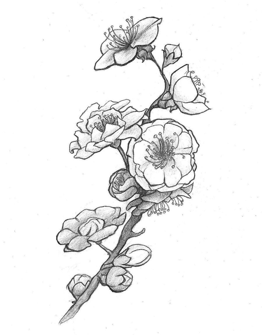 900x1150 Plum Blossom By Sellka