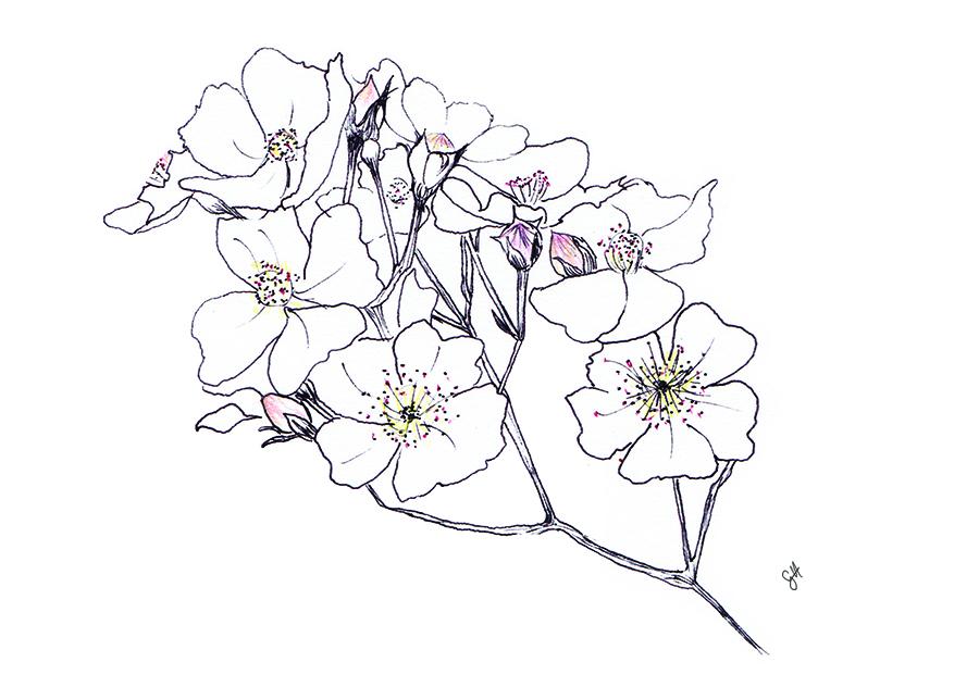 900x632 Plum Blossom Tattoo Design By Pibucom