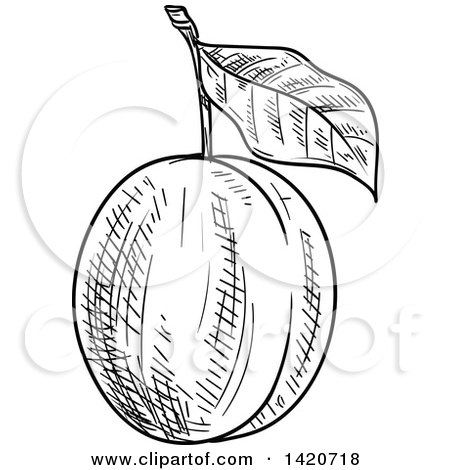 450x470 Clipart Of A Black And White Sketched Plum Or Apricot