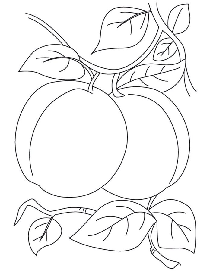 696x900 Coloring Pages Plum, Printable For Kids Amp Adults, Free To Download