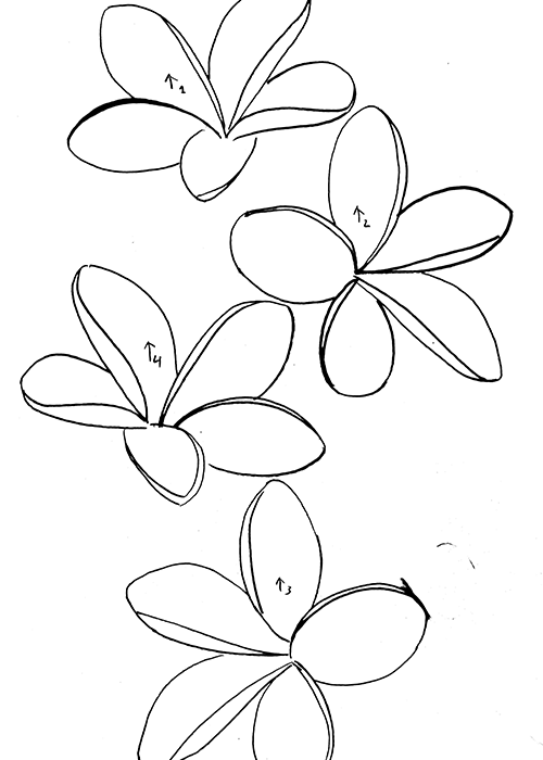 Plumeria Drawing At Getdrawings Free Download