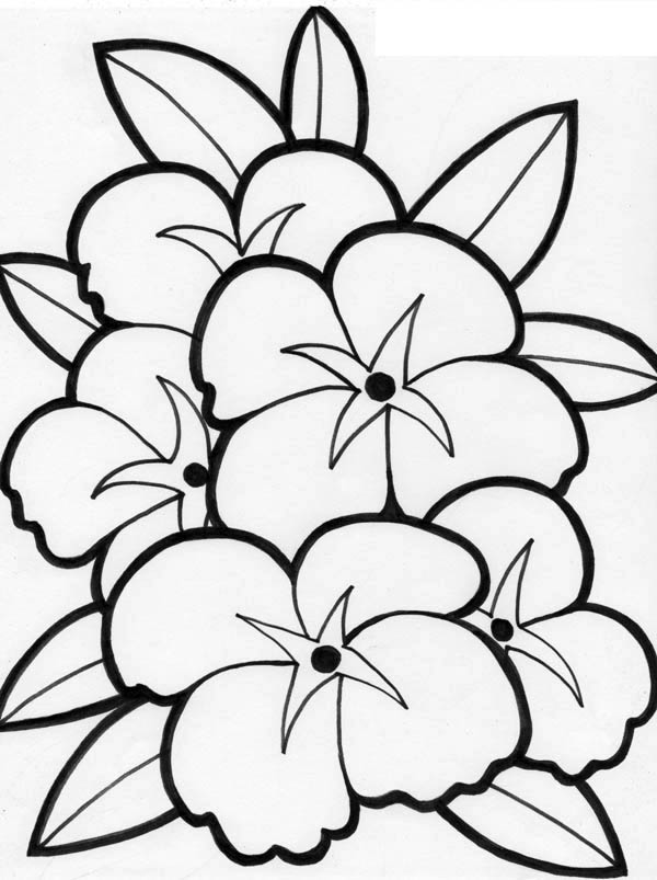 Plumeria Flower Drawing