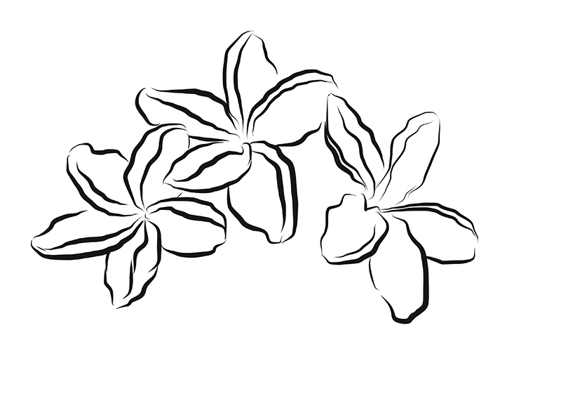 800x564 Sketching On The Go Fluid Freehand Sketching With Adobe
