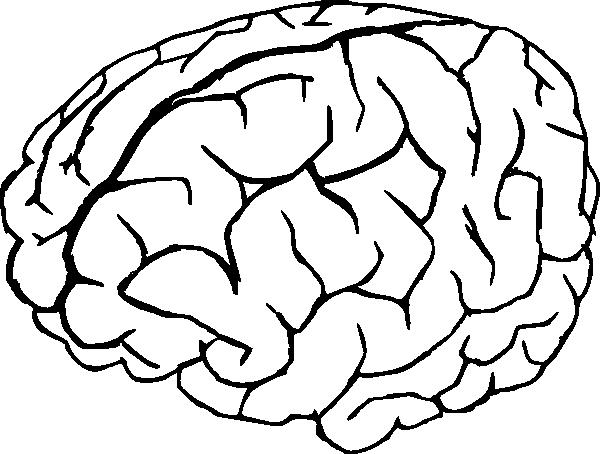 600x454 Brain Drawing Clip Art