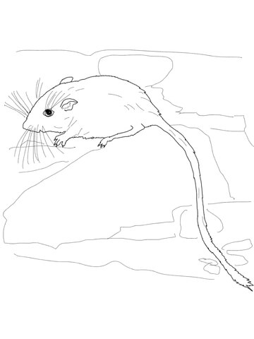 360x480 Desert Pocket Mouse Coloring Page Free Printable Coloring Pages