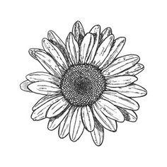 Pocket Watch Drawing Tumblr