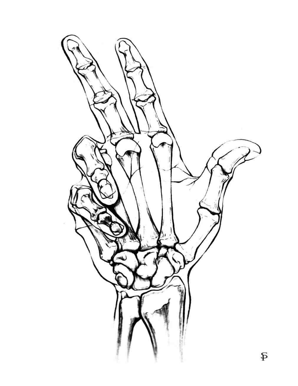 1011x1308 Skeleton Hand Drawing Tumblr By Sparksflystudios