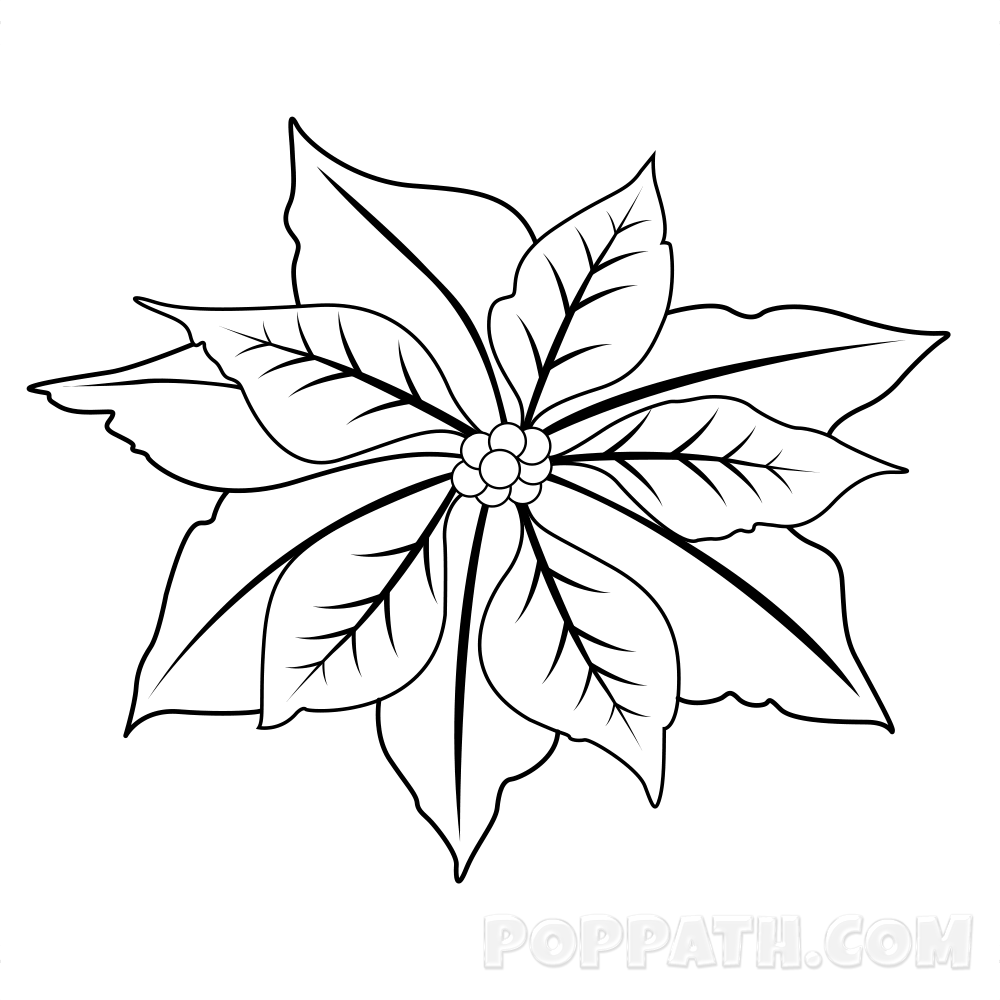 1000x1000 How To Draw A Poinsettia Pop Path