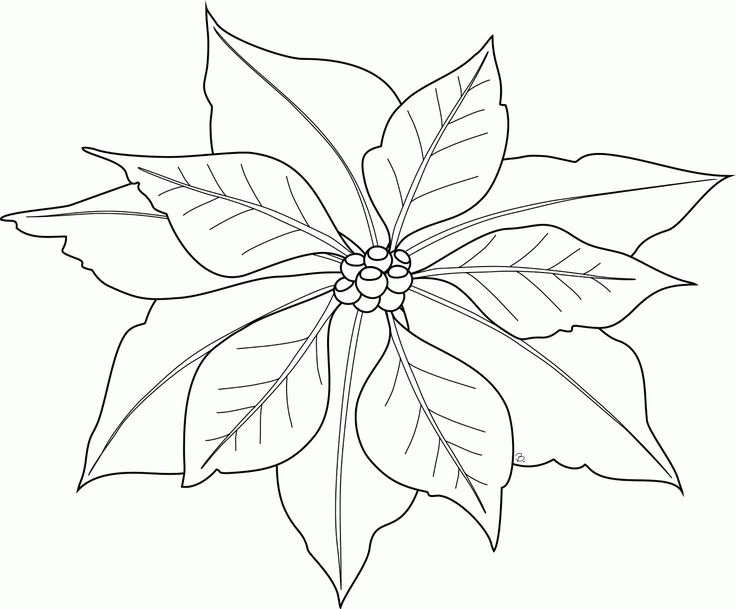 736x609 42 Best Poinsettia Tattoo Drawings Images On Tattoo