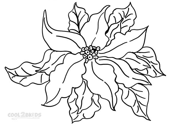 600x436 Poinsetta Coloring Page Poinsettia Coloring Pages For Kids