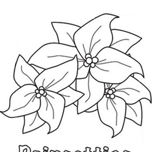 300x300 Poinsettia Flower December Coloring Page Poinsettia Flower