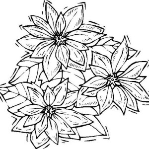 300x300 Poinsettia In Bloom Coloring Page Color Luna