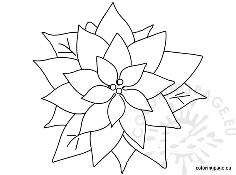 804x595 Poinsettia Templates