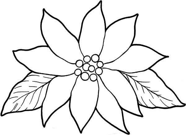 600x436 Blooming Poinsettia Coloring Page Color Luna
