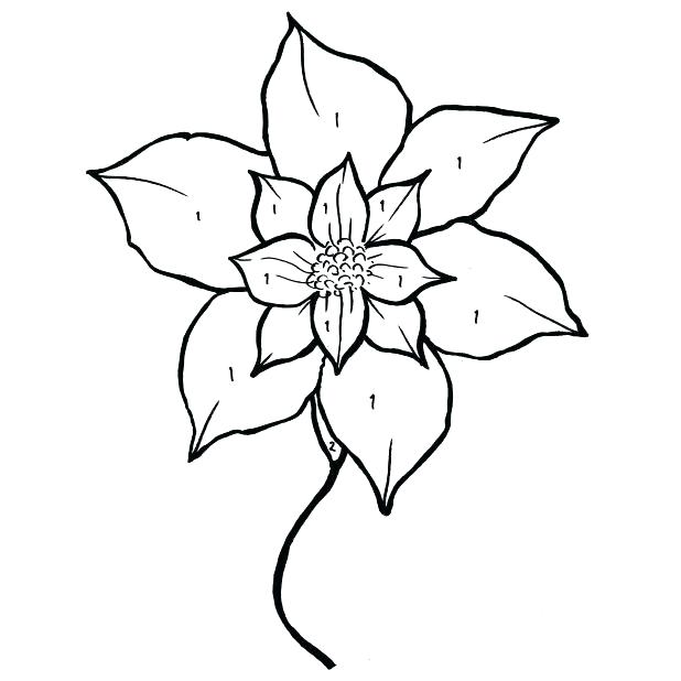 618x618 Poinsettia Coloring Pages Drawing Of Poinsettia Coloring Page
