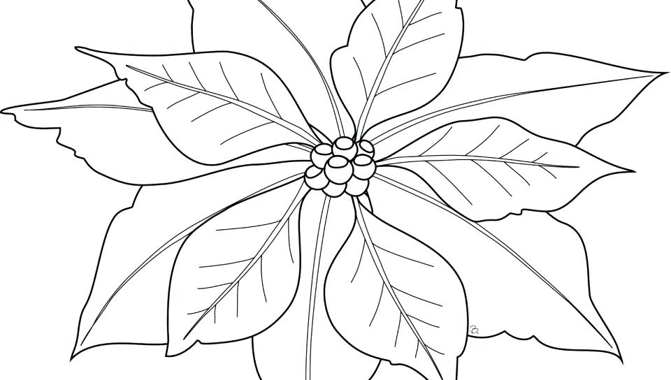 960x544 Poinsettia Coloring Pages Poinsettia Coloring Page To Print
