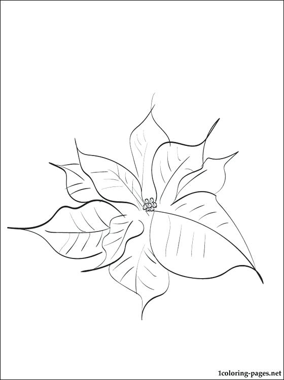 560x750 Poinsettia Coloring Sheet Drawing Of Poinsettia Coloring Page