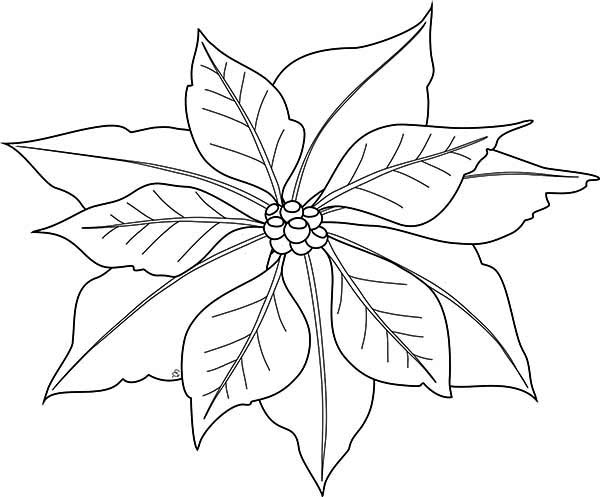 600x497 Simple Poinsettia Drawing For National Poinsettia Day Coloring
