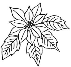 236x224 How To Draw A Poinsettia In 5 Steps Poinsettia, Creative Skills