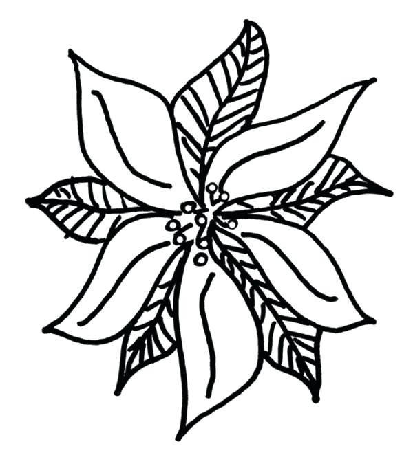600x662 Poinsettia Coloring Sheet Drawing Of Poinsettia Coloring Page