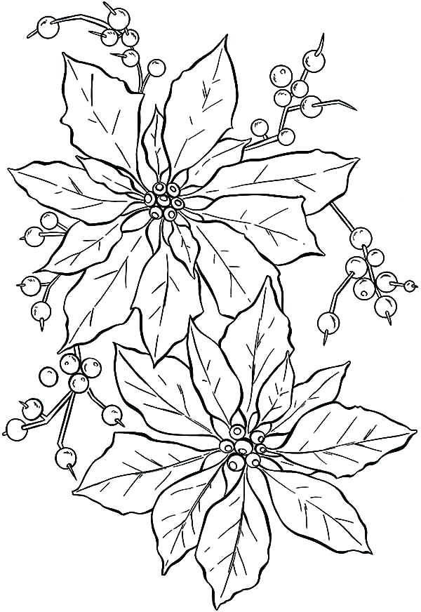 600x872 Poinsettia Coloring Sheet Poinsettia Flower Coloring Pages