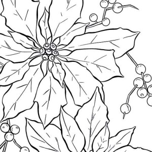 300x300 Poinsettia Outline For Poinsettia Day Coloring Page Coloring Sky